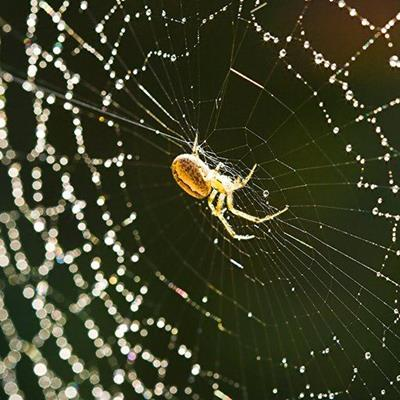 WEB, DEW, SILKEN, DROPLET, TRAP, SPIDER, THREAD, WOVEN, ARACHNID, SPIRAL
