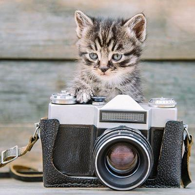 CAMERA, CUTE, STRAP, WOOD, LEATHER, BUCKLE, KITTEN, LENS, FELINE, PAW, VINTAGE