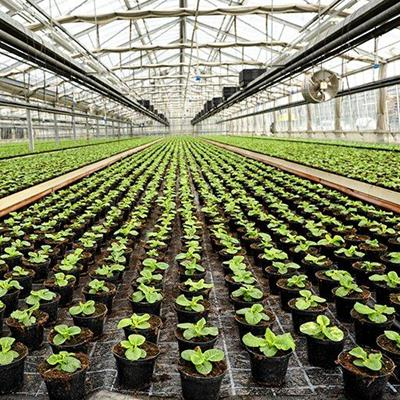 GREENHOUSE, POTS, CROP, NURSERY, SEEDLINGS, GLASS, ROOF, PLANTS, ROWS