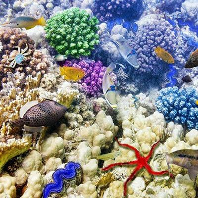 FISH, UNDERWATER, SHOAL, CRAB, CORAL, REEF, TROPICAL, STARFISH, AQUATIC, EXOTIC
