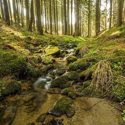 DANK, WATER, CLEARING, ROCKS, STONES, ROOTS, POOL, STREAM, MOSS, WOODLAND, TREES, GRASS