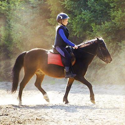 HORSE, PONY, SADDLE, REINS, TROTTING, RIDING, EQUESTRIAN, BRIDLE, GALLOP, CANTER
