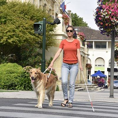 WALKING, CANE, HARNESS, ASSISTANCE, ANIMAL, TRAINED, TSHIRT, GUIDEDOG, BLIND, STREET, SANDALS