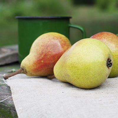 PEARS, FRUIT, ORGANIC, STALK, OUTDOORS, JUICY, MUG, HARVESTED, RIPE, SKIN