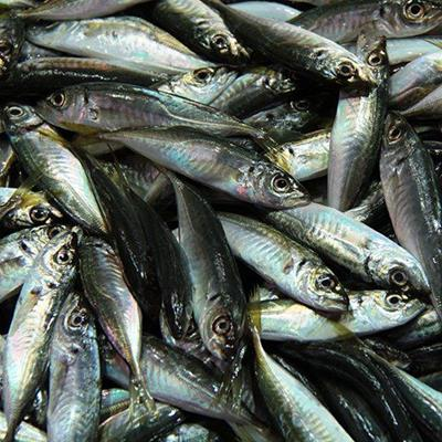 FISH, SCALES, SEAFOOD, EYES, MARKET, HARVEST, CATCH, SILVER, FINS, FRESH, OMEGA, PILE