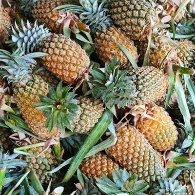 PINEAPPLES, FRUIT, LEAVES, DISPLAY, JUICY, FRAGRANT, RIPE, TROPICAL, PLANT, VITAMINS