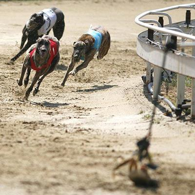 GREYHOUNDS, RACING, TRACK, WINNER, DOGS, LURE, BEND, RUNNERS, SPRINT, CONTEST, RAIL