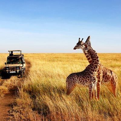 MALE, FEMALE, SAVANNAH, TOURISTS, TRACK, WILDLIFE, GIRAFFE, AFRICA, JEEP, SAFARI, GRASS, RESERVE