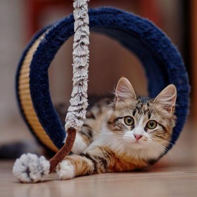 FELINE, ROPE, TOY, TABBY, PET, WATCHFUL, CAT, TUBE, PLAYFUL, KITTEN, PAWS