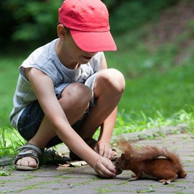 FEEDING, SANDAL, CAP, RODENT, GRASS, BOY, SQUIRREL, PATH, SHORTS, PARK, LEAVES